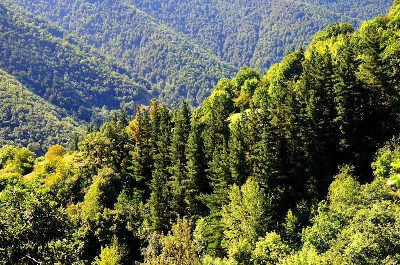 bosque_clima_atlantico
