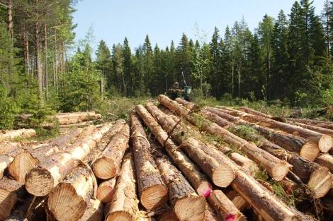 calderas_biomasa_bosque_sostenible